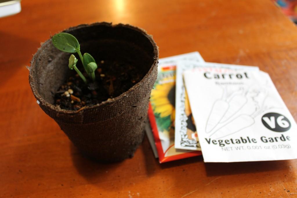 coffee in plants