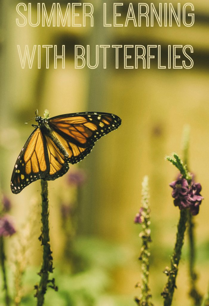 Fun Summer Learning with Butterflies